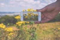 Photographie représentant un smartphone en train de prendre une photographie de paysage naturel composé de fleurs jaunes