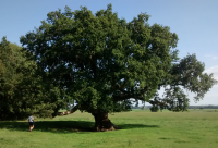 Photographie d'un arbre
