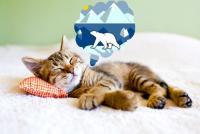 Photographie d'un chat pensant dans une bulle à une image d'ours polaire sur la banquise