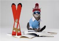 Photographie d'un chat avec des lunettes et un bonnet de ski, ainsi qu'une paire de ski rouge à ses côtés