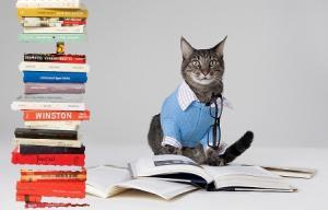 Chat portant une chemise et des lunettes, se tenant devant une pile de livres