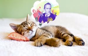 Photographie d'un chat pensant dans une bulle à Boris Vian