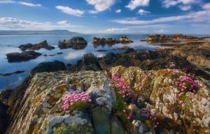 Un paysage d'Irlande avec la mer dans le fond et au premier plan des rochers et des fleurs roses