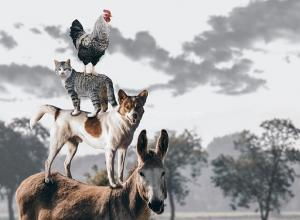 Un âne, un chien, un chat, une poule forment une pyramide
