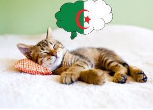 Photographie représentant un chat en train de dormir. Une bulle contenant un drapeau algérien représente le rêve du chat