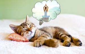 Photographie représentant un chat en train de dormir. Une bulle contenant un une personne en position de yoga, représente le rêve du chat