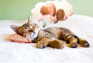 Photographie d'un chat en train de rêver à une mère avec son enfant
