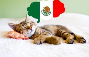 Chat qui dort et qui rêve du mexique
