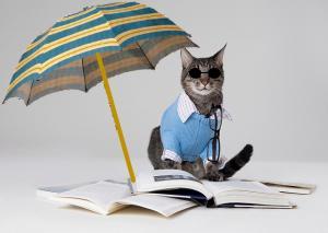 Photographie d'un chat avec des lunettes de soleil, entouré d'un décor contenant un parasol et des livres sur le sol